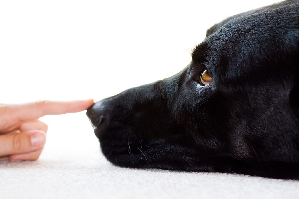 Pet Carpet Cleaning Services Colorado Springs